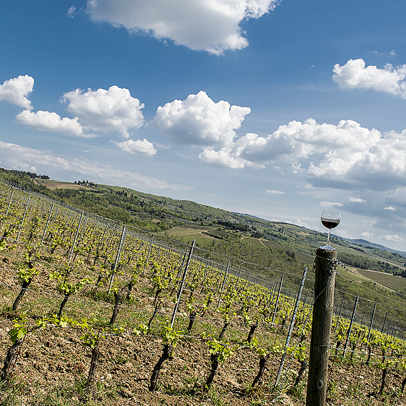 The Best Tuscany Wine Tours for the First Timer to Italy